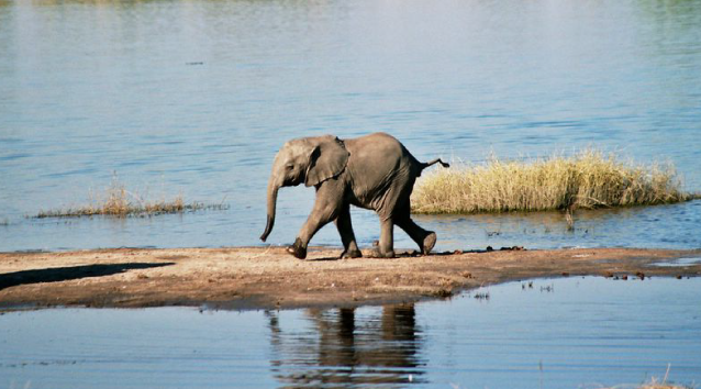 we-chobe-elephant