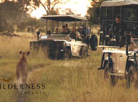 yb-wilderness-safaris
