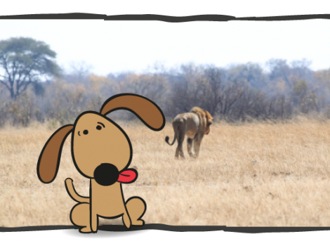 joke-dog-on-safari