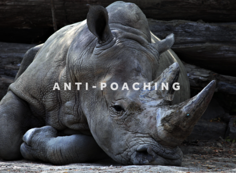yb-anti-poaching