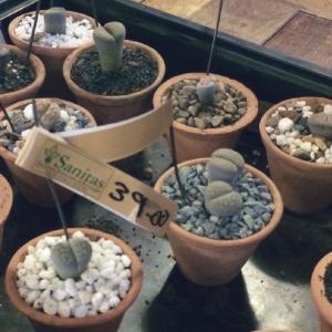 sanitas-rock-plants