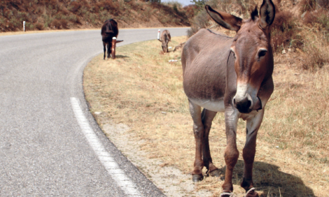 yb-donkey
