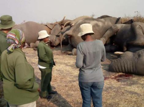 yb-nine-elephants-dead