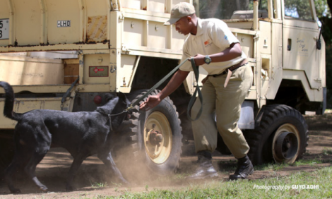 yb-wildlife-trafficking-dogs