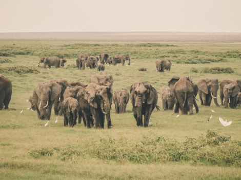 yb-elephant-numbers