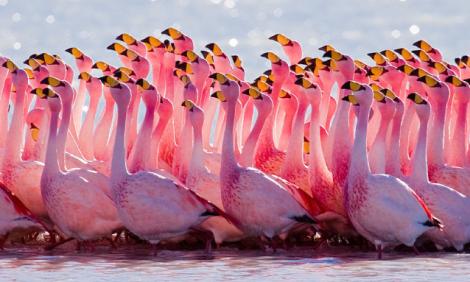 yb-flamingo