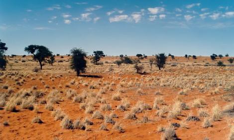 yb-kalahari-desert
