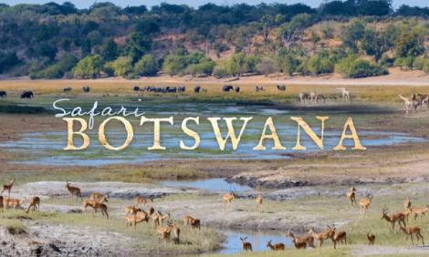 yb-safari-botswana