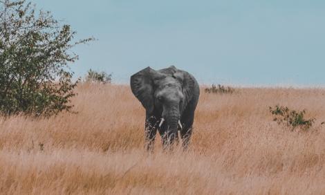 Botswana elephant population – YourBotswana