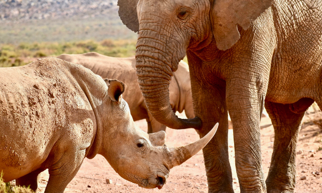 yb-elephant-rhino