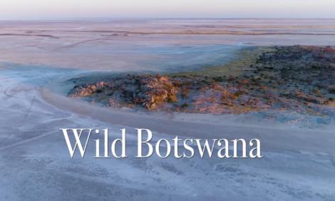 yb-wild-botswana