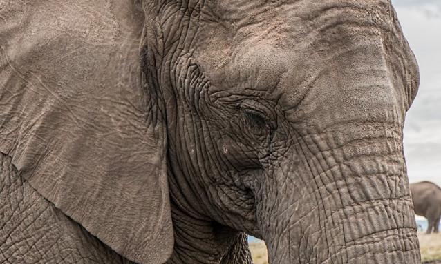 yb-elephant-hunting