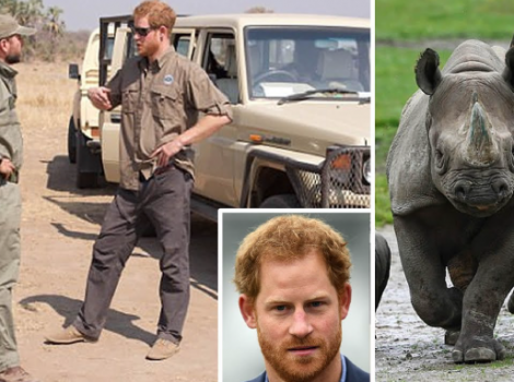 yb-prince-harry-rhino
