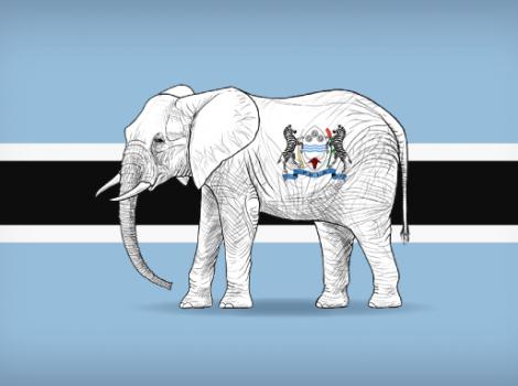 yb-bw-elephant