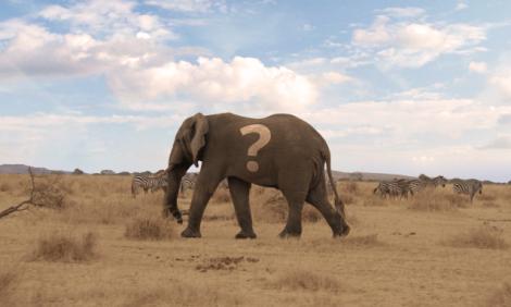 yb-elephant-poaching-doubts