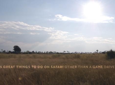 yb-five-safari