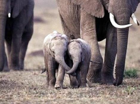 yb-baby-elephants
