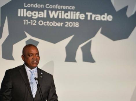 yb-illegal-wildlife-trade