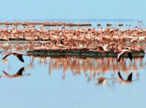 yb-bw-flamingo