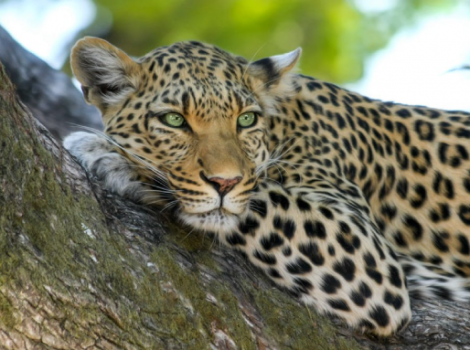 yb-leopard-travel-list-2019