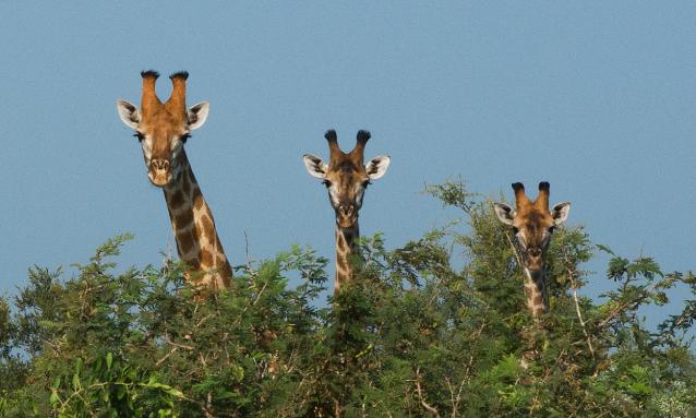yb-safari-in-botswana