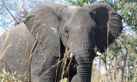 yb-elephant-conflict