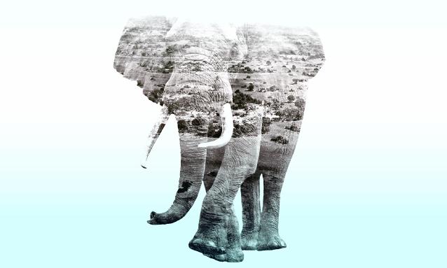 yb-elephant-conflict-opinion