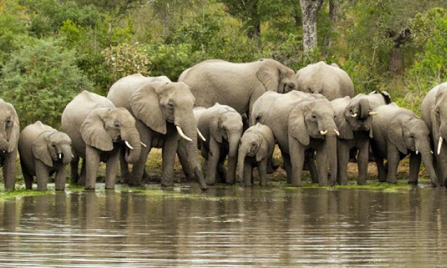yb-elephant-herd