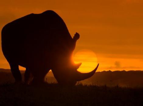 yb-genesis-of-anti-poaching
