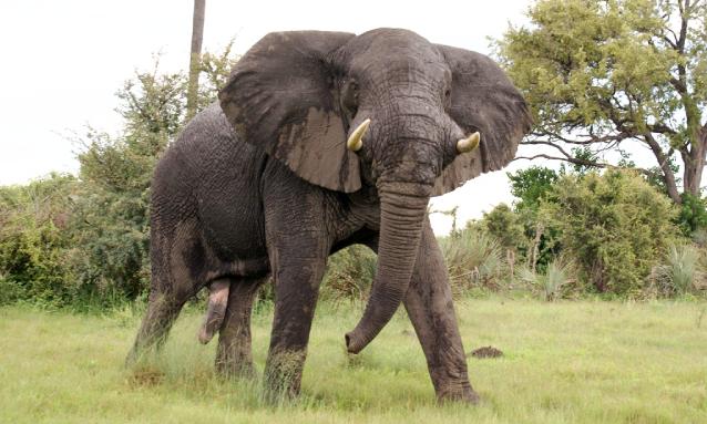 yb-human-wildlife-conflict
